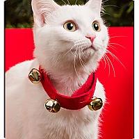 Adopt A Pet :: Princess Anna - Owensboro, KY