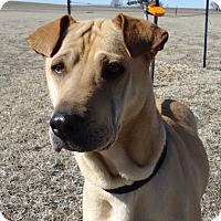 Adopt A Pet :: Sadie - Larned, KS