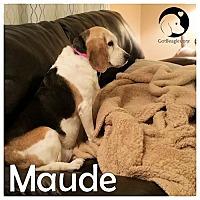 Adopt A Pet :: Maude - Novi, MI