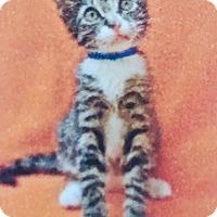 Adopt A Pet :: Bentley - Santa Monica, CA
