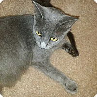 Adopt A Pet :: Princess Diana - Kennesaw, GA