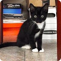 Adopt A Pet :: Oreo - Watkinsville, GA