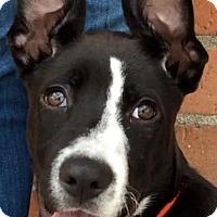 Adopt A Pet :: POSSUM (video) - Los Angeles, CA