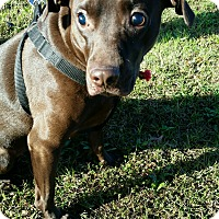Adopt A Pet :: Baker - Lebanon, CT