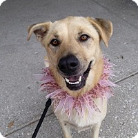 Adopt A Pet :: Trudy Sue - Fishers, IN
