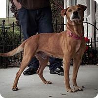 Adopt A Pet :: Gunther - Dublin, VA