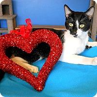 Adopt A Pet :: Boots Wellington - Glendale, AZ