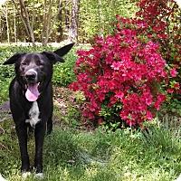 Adopt A Pet :: Ralph - Warrenton, NC