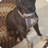 Adopt A Pet :: Tessa - East McKeesport, PA