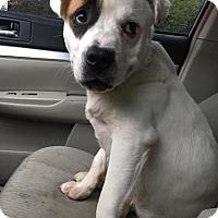Adopt A Pet :: Sammy - Pittsburgh, PA