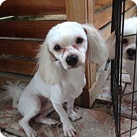 Adopt A Pet :: Felix - Studio City, CA