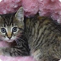 Adopt A Pet :: Delila - Manhattan, NY