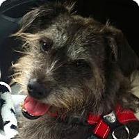 Adopt A Pet :: Pumba - Worcester, MA