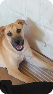 Catahoula Leopard Dog Mix Dog for adoption in Dale, Indiana - Annie Oakley