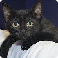 Adopt A Pet :: Annette - Lenexa, KS
