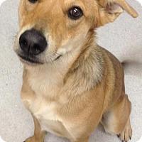 Adopt A Pet :: Konig - Spokane, WA