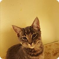 Adopt A Pet :: Mockie - Grayslake, IL