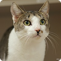 Adopt A Pet :: Jasper - East Hartford, CT
