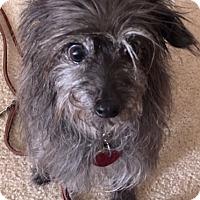 Adopt A Pet :: Nina - Helotes, TX