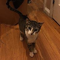 Adopt A Pet :: Sky - Berkley, MI