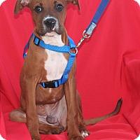 Adopt A Pet :: Dennis - Umatilla, FL