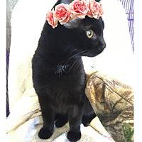 Adopt A Pet :: Pinky - Paducah, KY