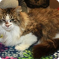 Adopt A Pet :: Bella - Cottageville, WV