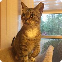 Adopt A Pet :: Maxine - Gainesville, FL
