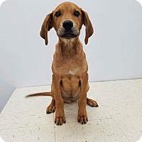 Adopt A Pet :: Heflin - Patterson, NY