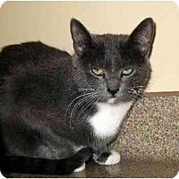 Adopt A Pet :: Missy - Fremont, MI