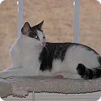 Adopt A Pet :: Juliette - Monroe, GA