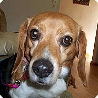 Adopt A Pet :: Audrey - Novi, MI