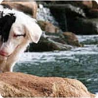 Adopt A Pet :: Draco - Mesa, AZ
