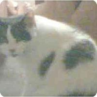 Adopt A Pet :: Yoshi - Scottsdale, AZ
