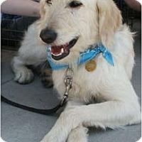 Adopt A Pet :: Linus - Kansas City, MO