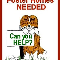Adopt A Pet :: Foster Homes Needed - Pittsburgh, PA