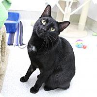 Adopt A Pet :: Mo - Newport Beach, CA