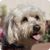 Adopt A Pet :: Whitney - San Francisco, CA