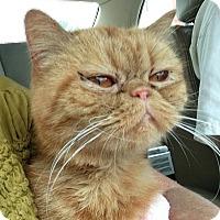 Adopt A Pet :: Farah - Columbus, OH