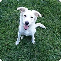Adopt A Pet :: Neena - Flemington, NJ