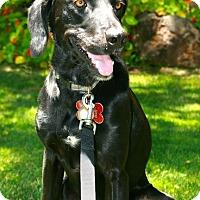 Adopt A Pet :: Otto - Penngrove, CA