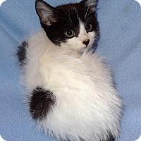 Adopt A Pet :: Kim - Bentonville, AR
