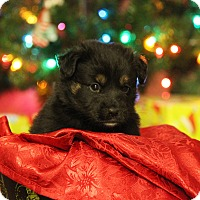 Adopt A Pet :: Pixel - Waldorf, MD