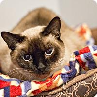 Adopt A Pet :: Sabrina - Lincoln, NE