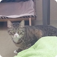 Adopt A Pet :: Bryan - Chula Vista, CA