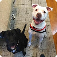 Adopt A Pet :: Milo - Washington, DC