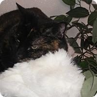 Adopt A Pet :: Priscilla #3 - El Cajon, CA