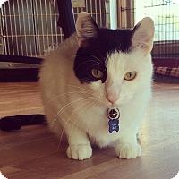 Adopt A Pet :: Cirkus - Alexandria, MN