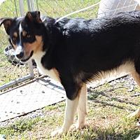Adopt A Pet :: Alfie - Harmony, Glocester, RI