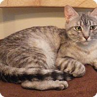 Adopt A Pet :: Jada - Quail Valley, CA